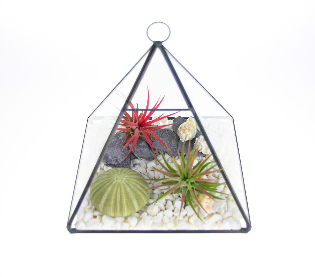 Air Plant and Shell Terrarium Ideas