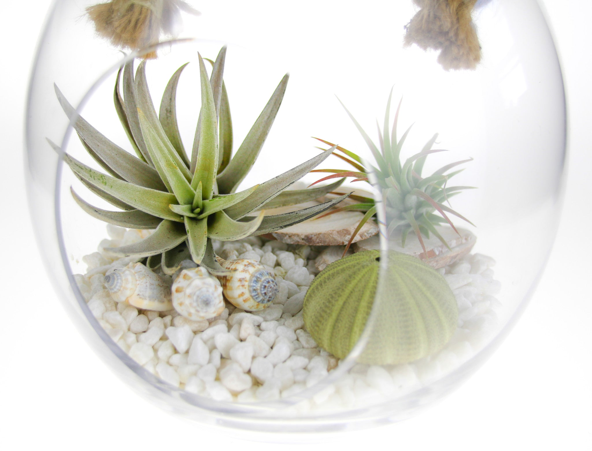 Calming Oceans Glass Rope Air Plant Terrarium Kit