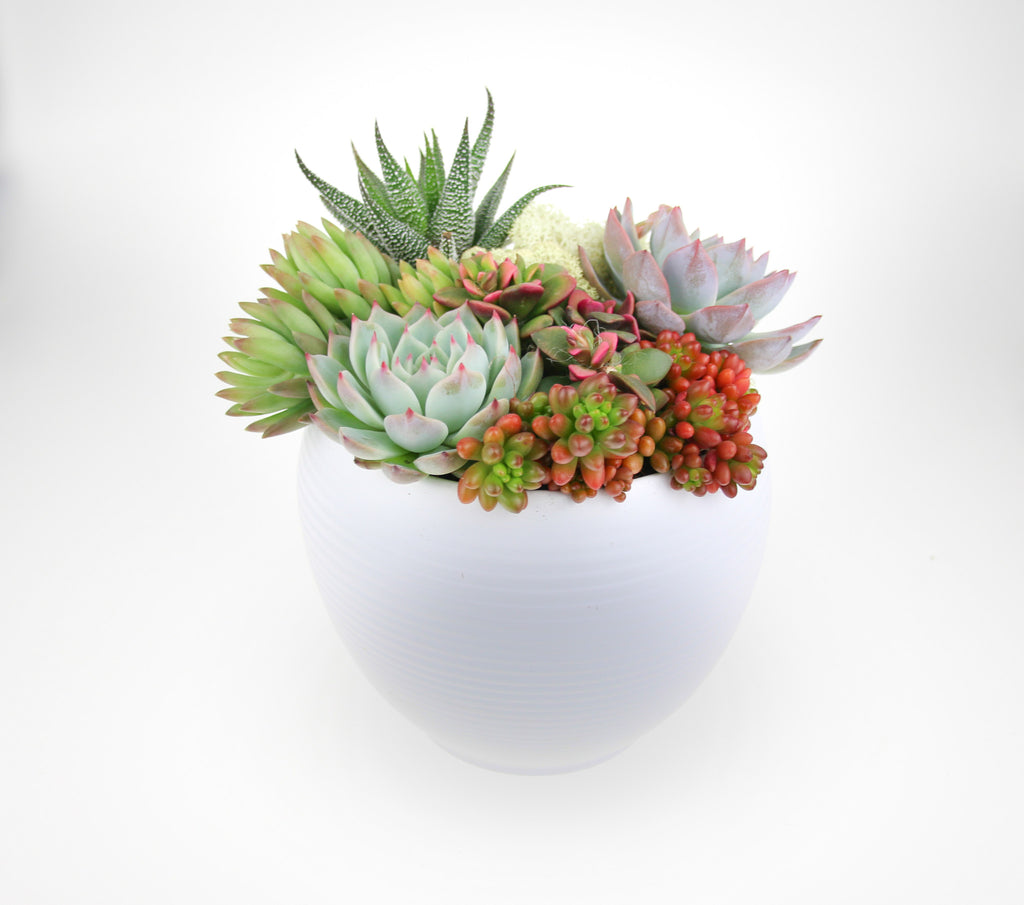 Planted Succulent Arrangement