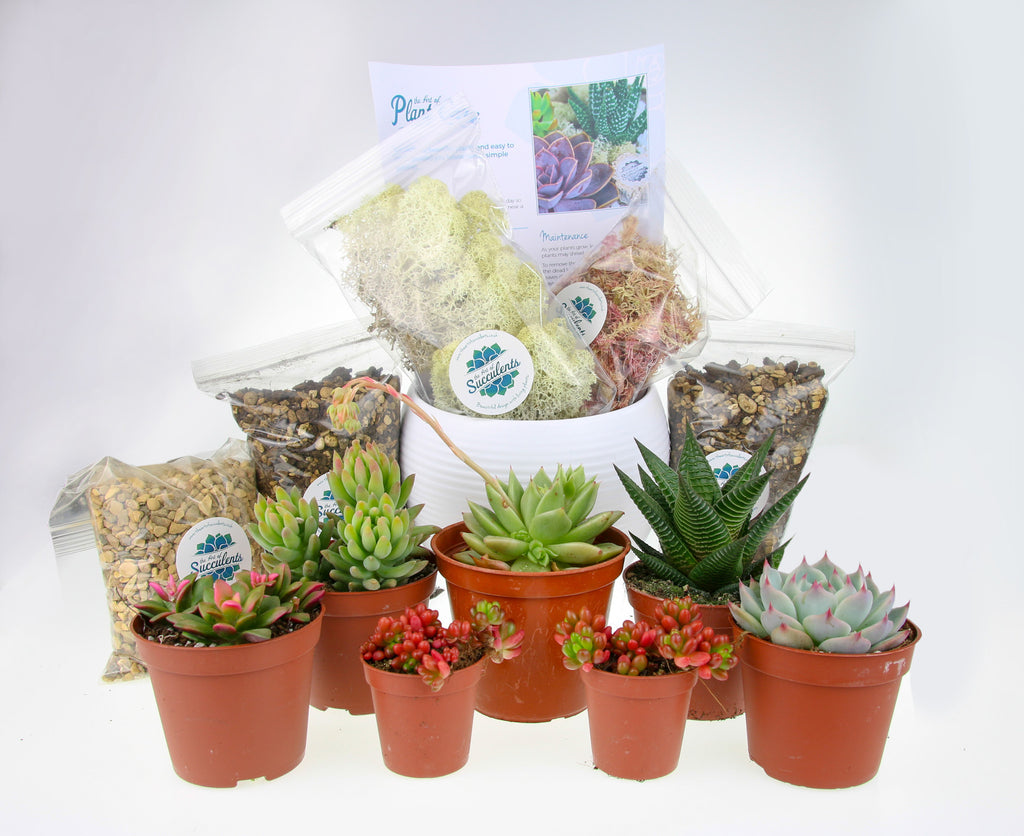 Self assembly indoor plant kit