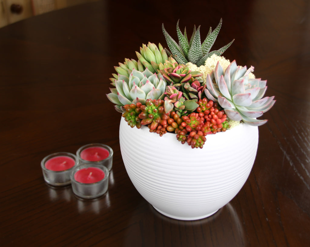 White ceramic planter with succulent plants