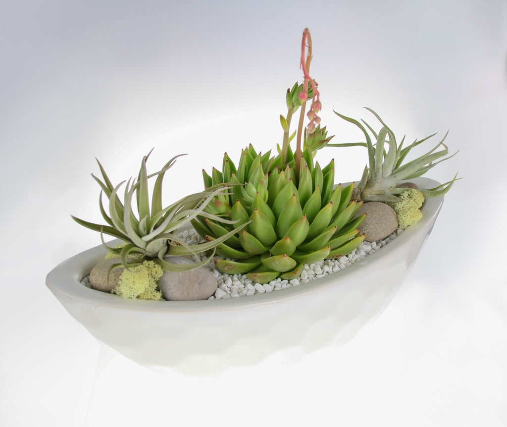 Air Plant and Succulent indoor planter