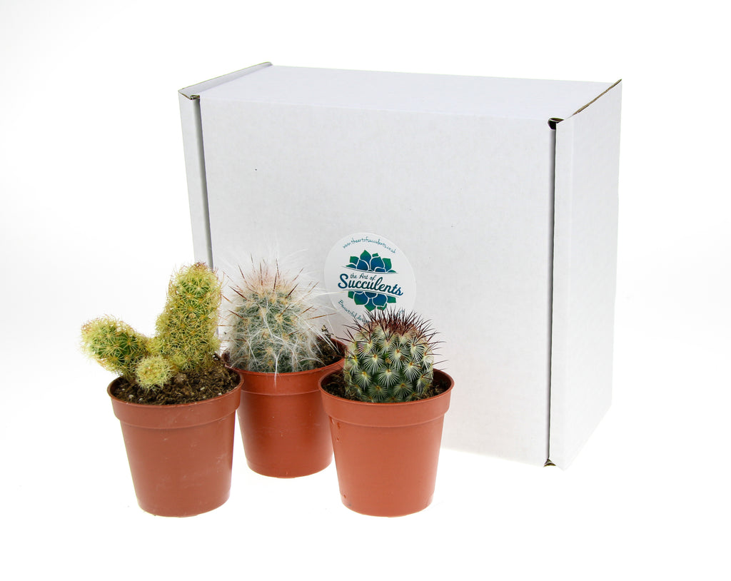 Cactus plants to buy