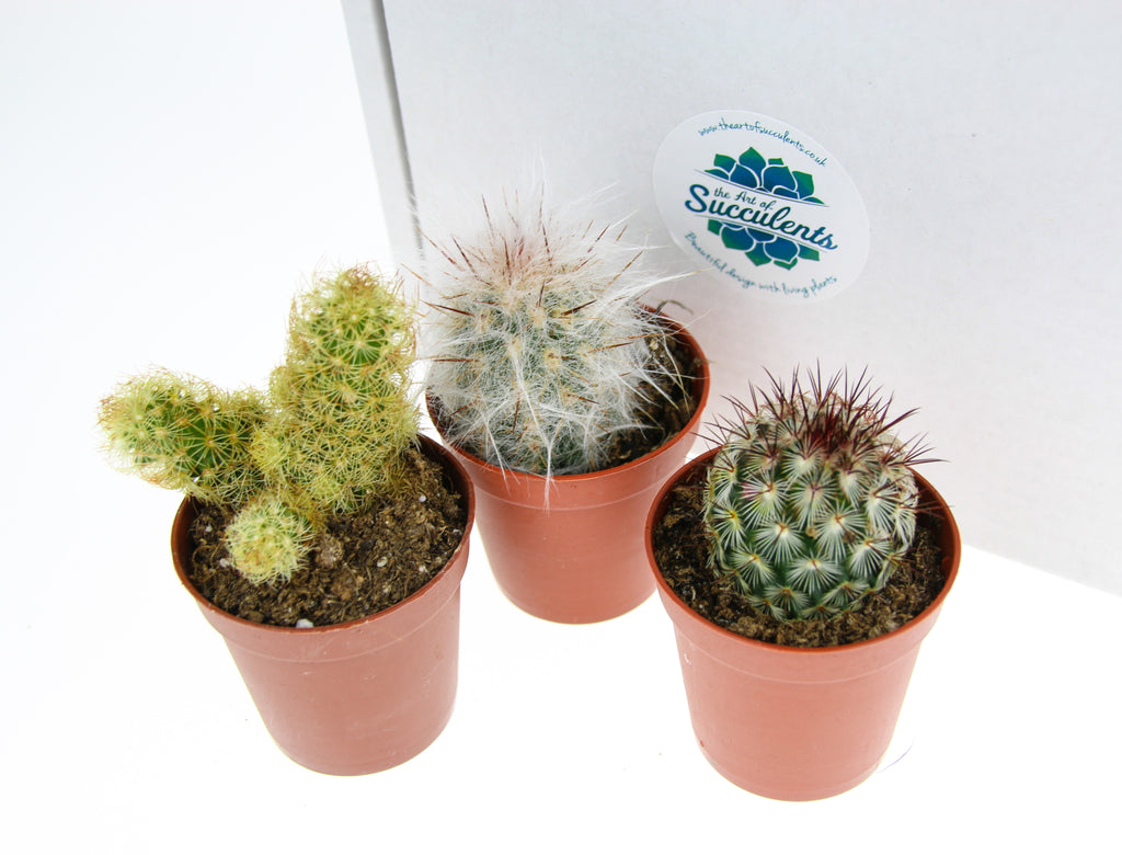 Cactus Plant Selection Pack