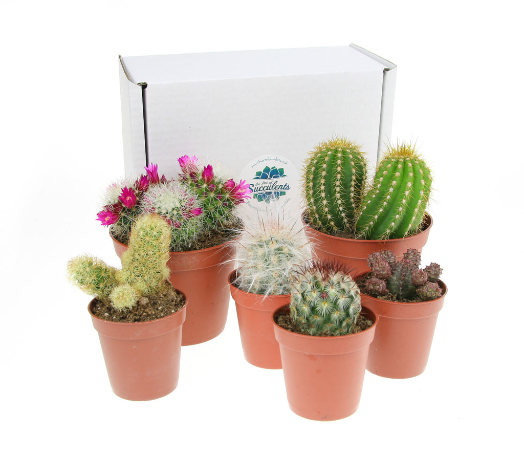 Cactus plants for terrarium