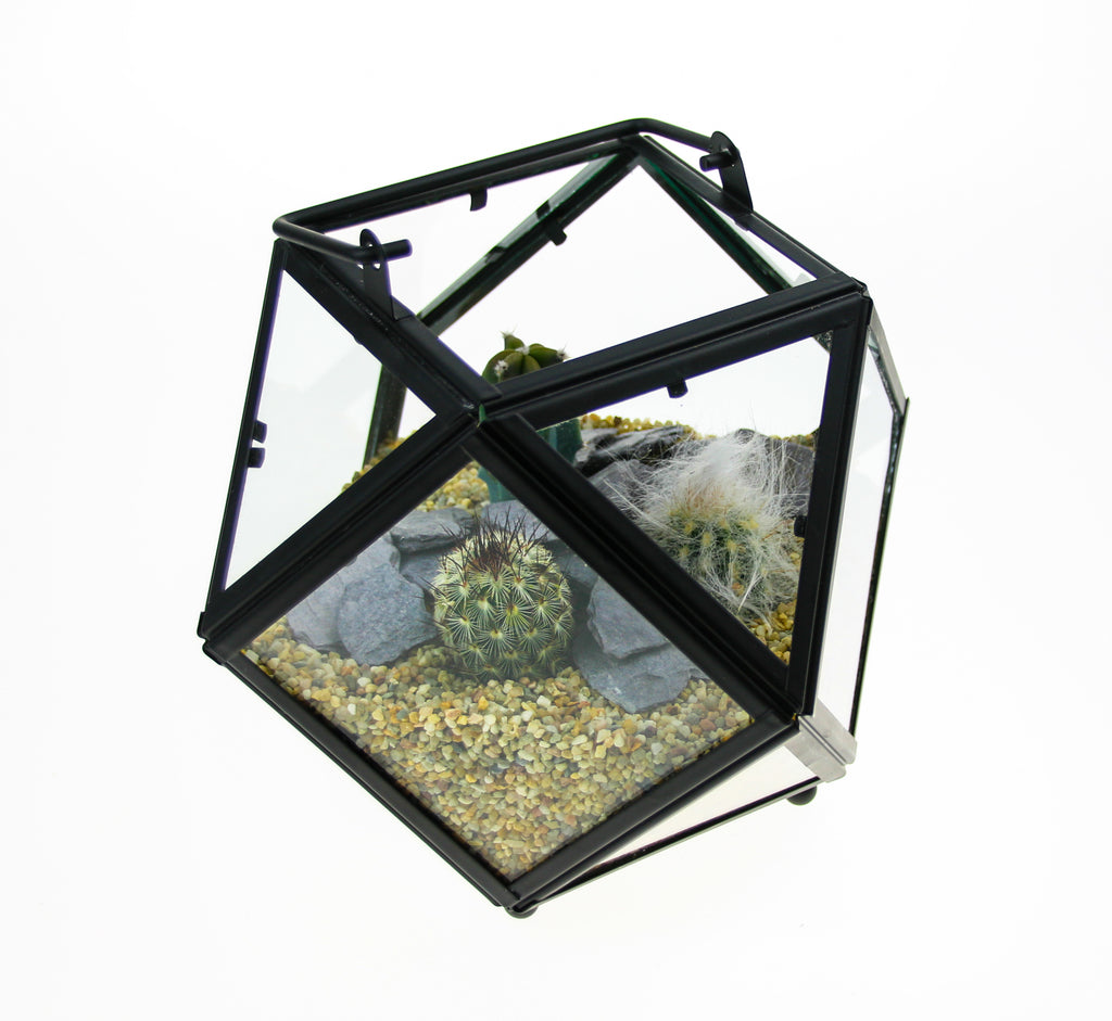 Cactus Terrarium with plants
