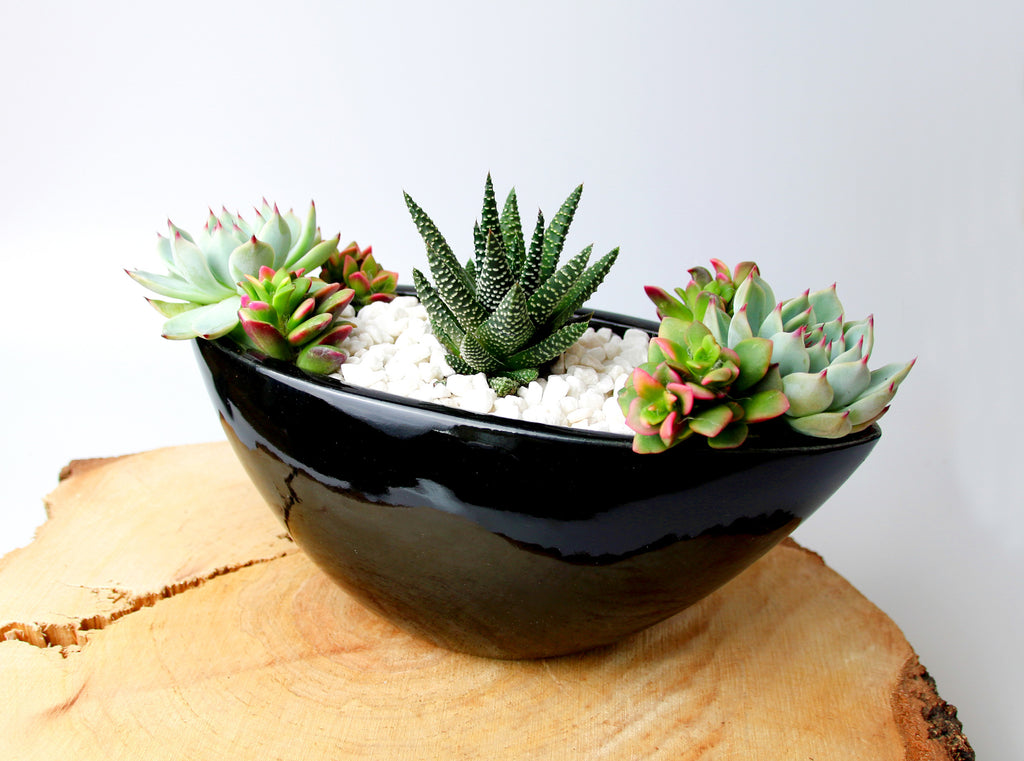 Black Indoor Planter with Succulents