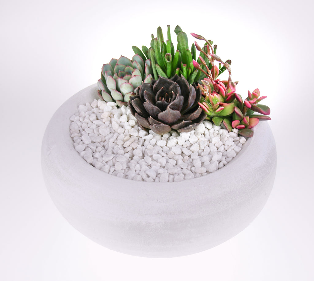 Rustic White Indoor Succulent Planter