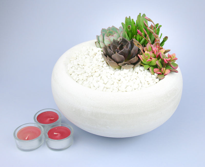 Succulent Indoor Plant Kit