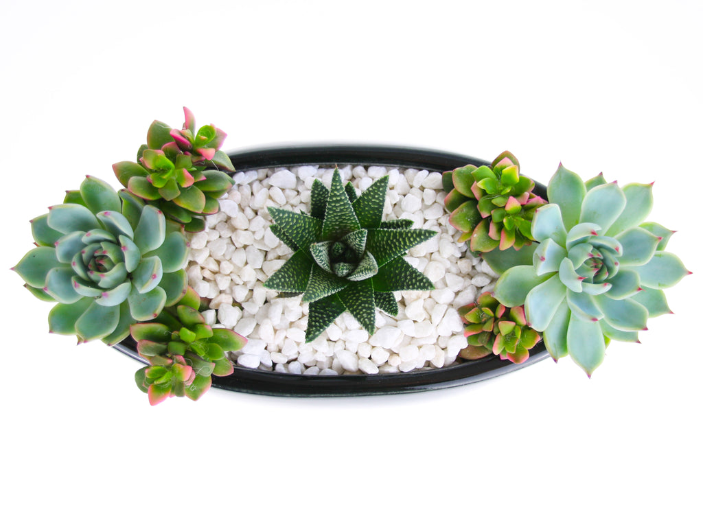 Succulent Planted Arrangement for the Home