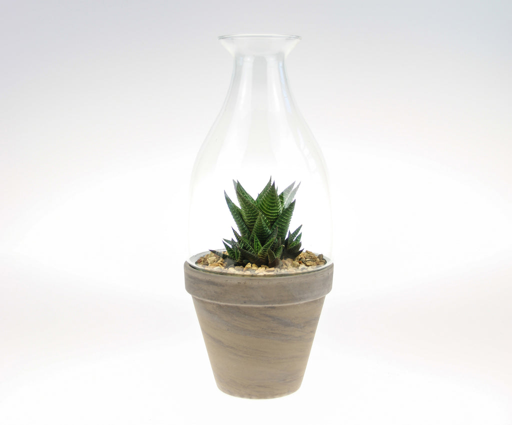 Ceramic and Glass Cloche Planter