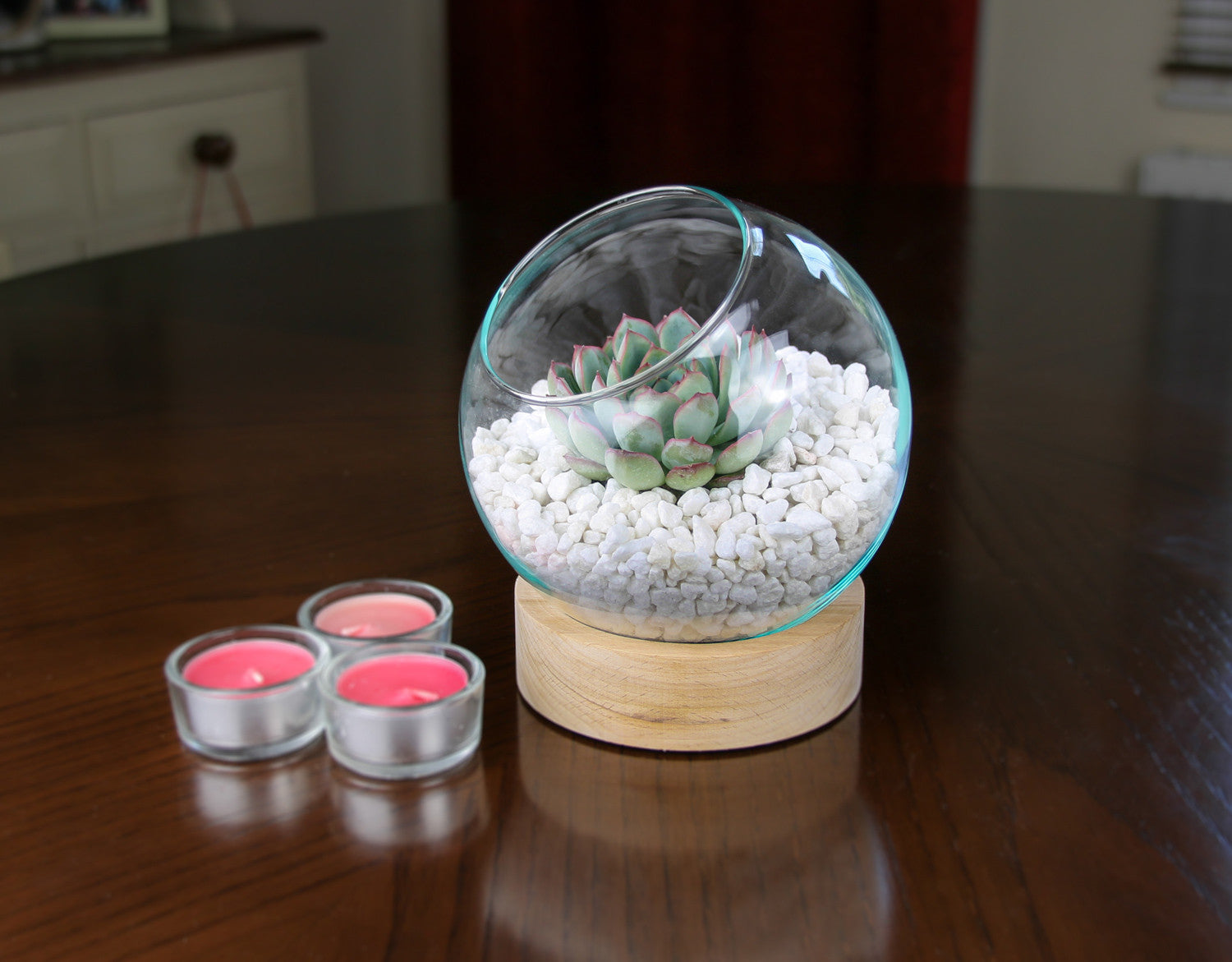 Glass Globe Terrarium Kit On Wooden Base With Living Succulent