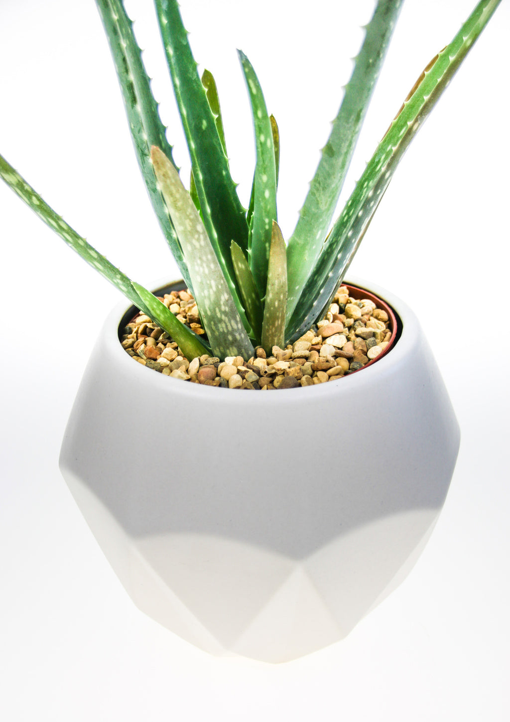 Indoor Aloe Vera Plant Kit