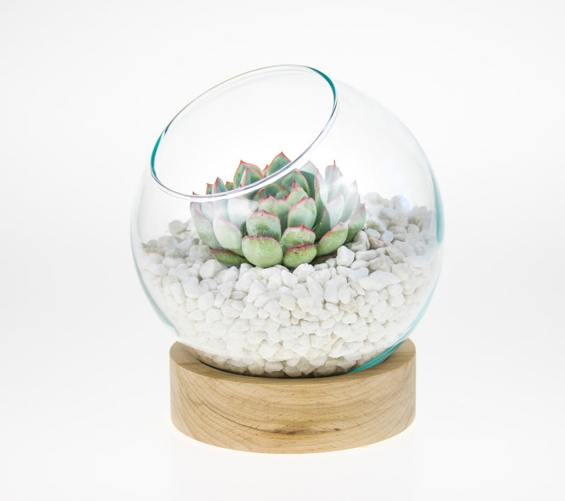 Indoor DIY Terrarium Kit with wooden base