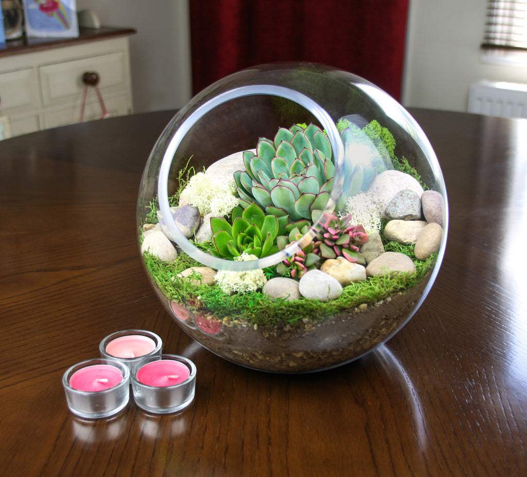 Landscaped Terrarium kit