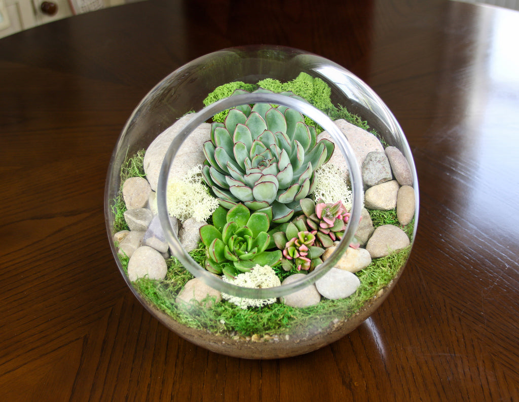 Succulent Terrarium Kit with luscious moss