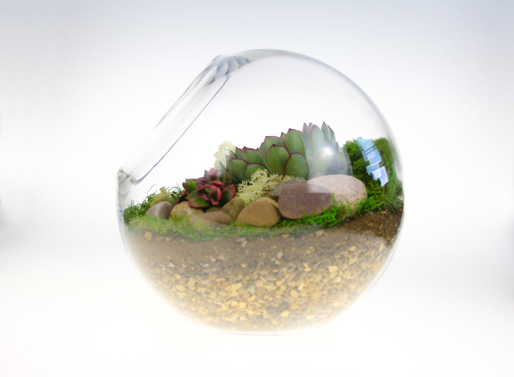 Large globe terrarium kit with living plants