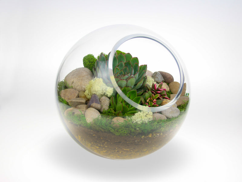 Indoor Succulent Terrarium from the UK