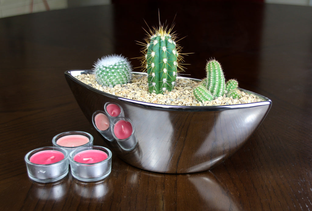 Cactus planter for the home