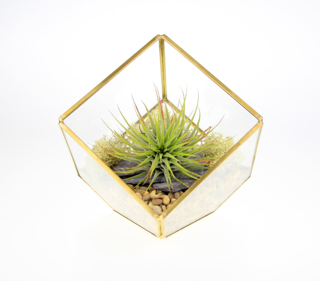 Square Terrarium with Air Plant