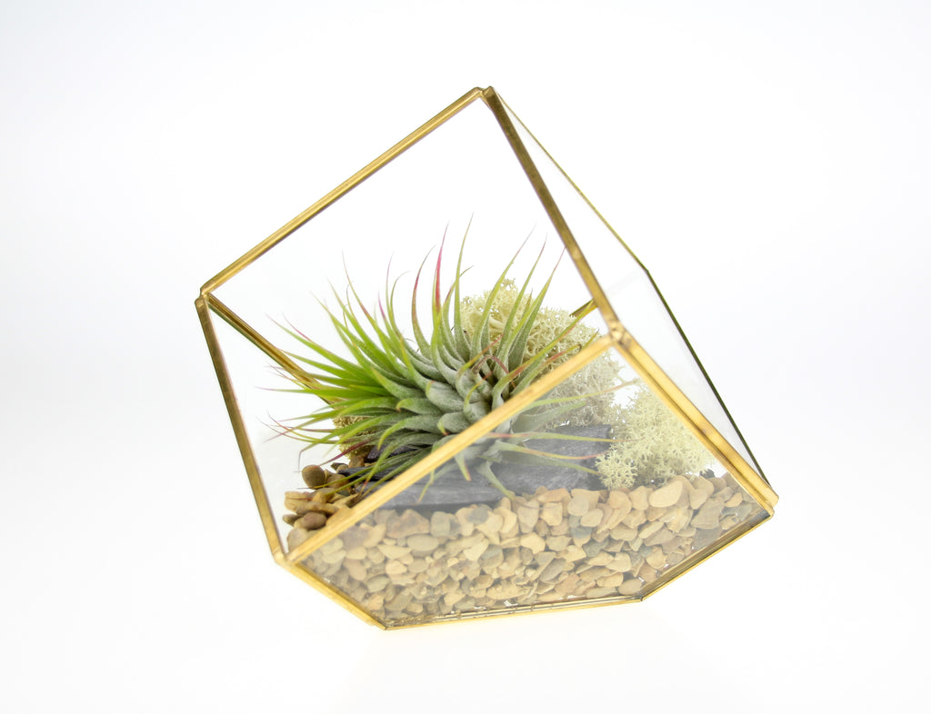 UK made terrarium kit