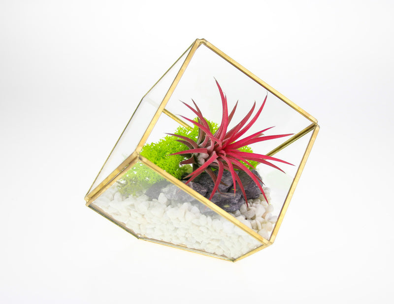 DIY Terrarium with Air Plant