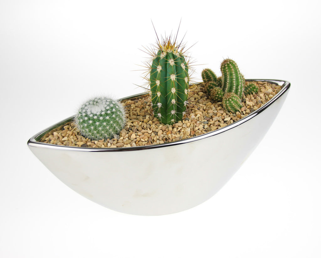 DIY cactus indoor planter