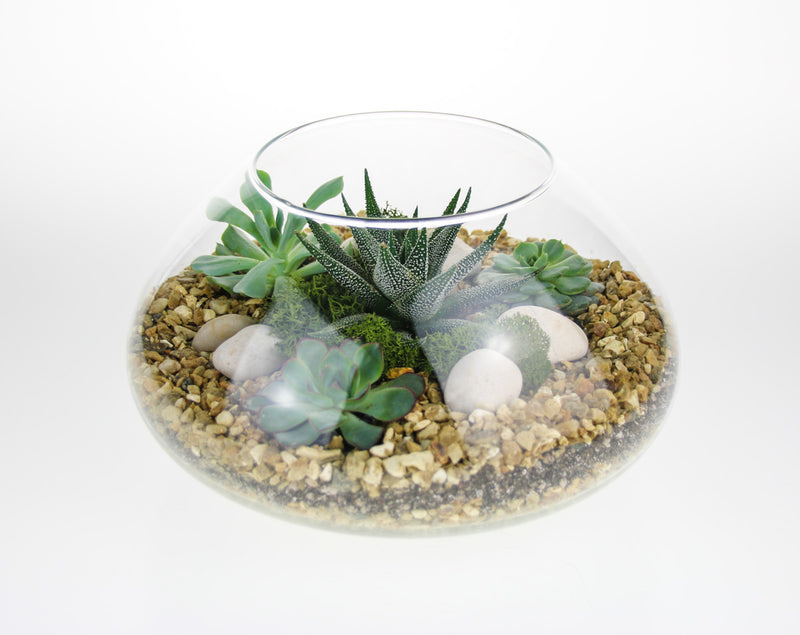 Space Bowl Succulent Terrarium Kit