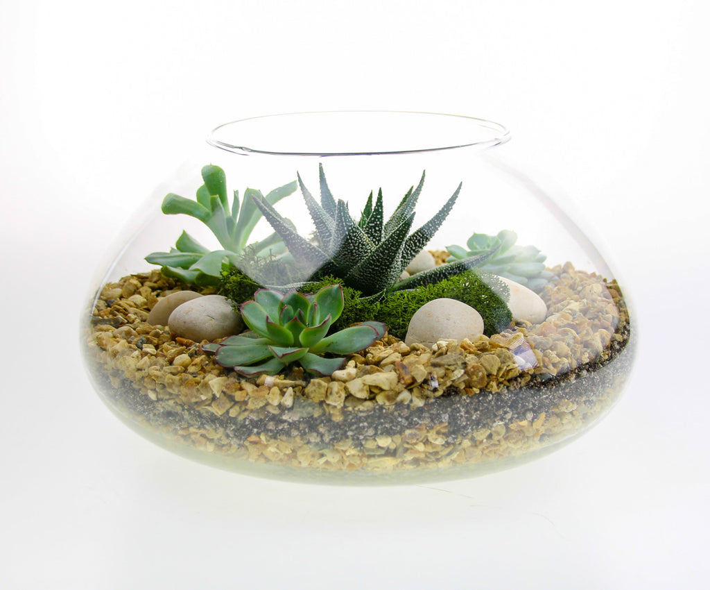 Terrarium with real plants