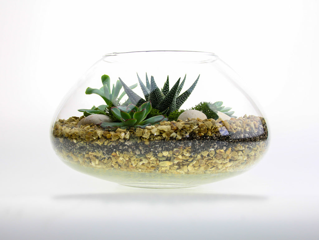 Space Bowl Glass Terrarium
