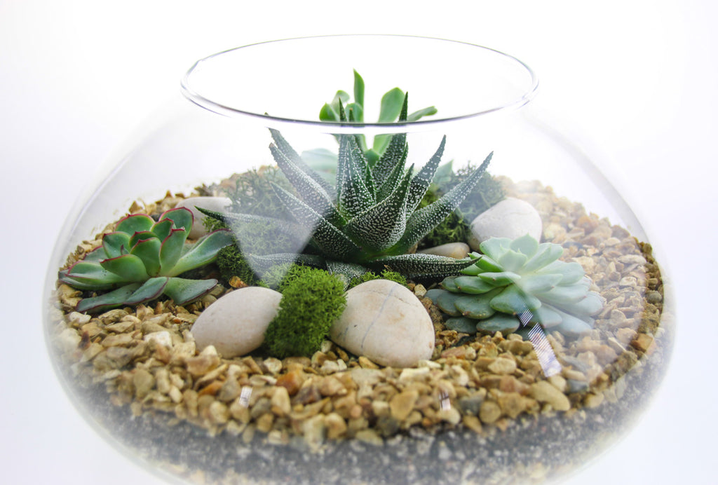 Indoor plant display in glass bowl