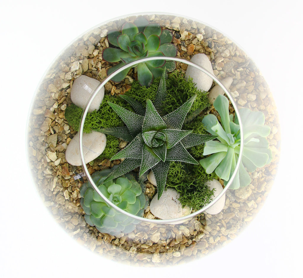 Space Bowl Terrarium