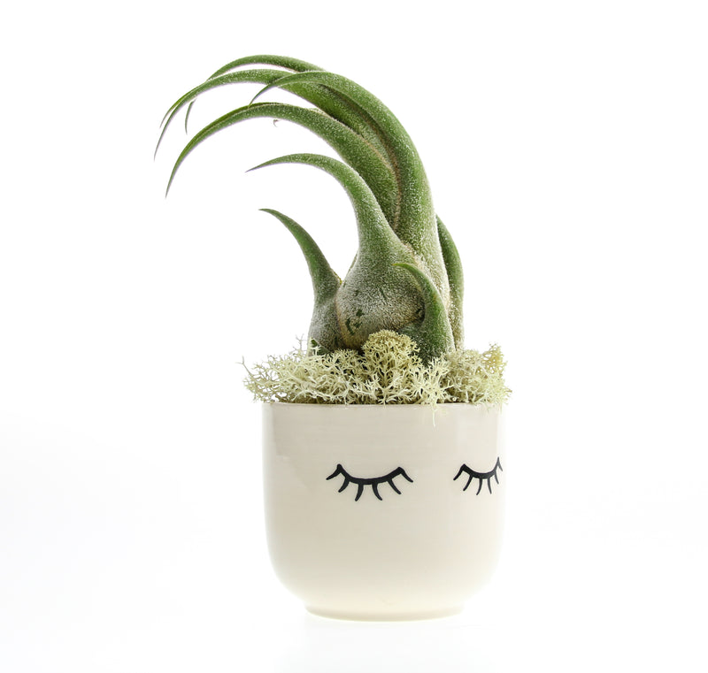 Air Plant Swooping Hair Planter