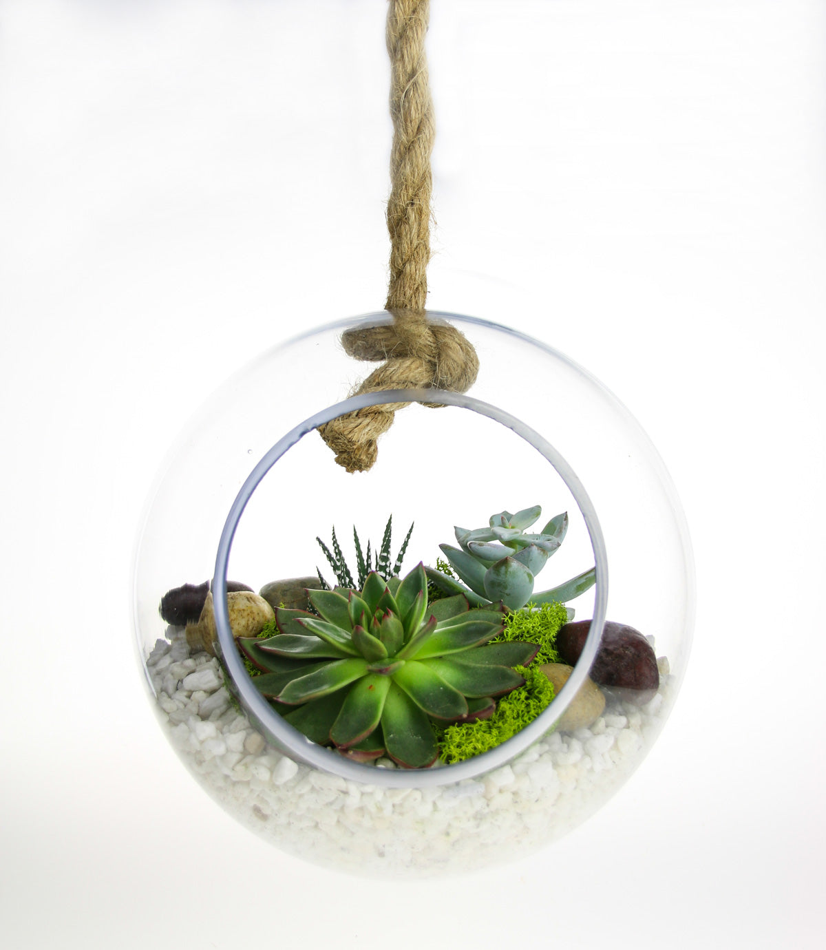 Glass Globe Hanging Terrarium With Real Succulent Plant Home Decor