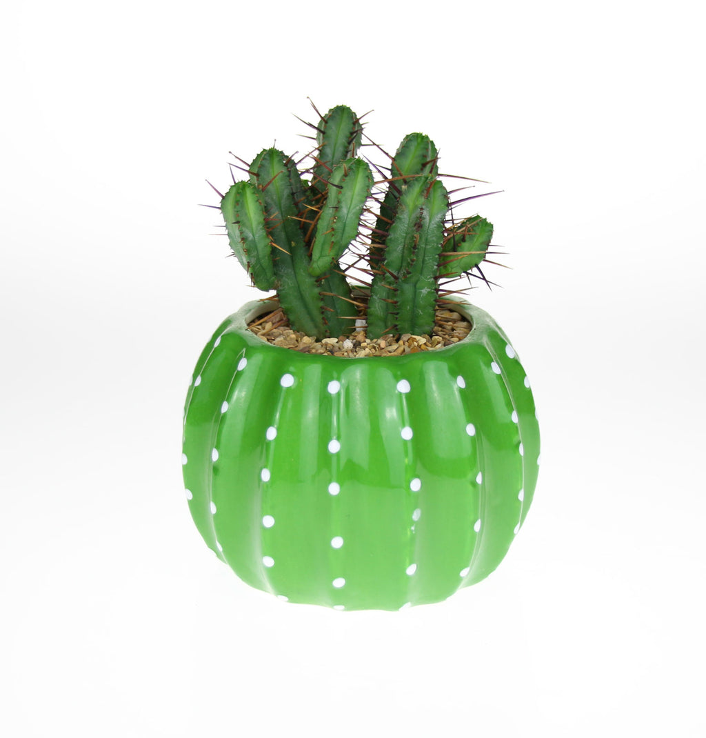 Super Cute Cacti Planter with Living Plant