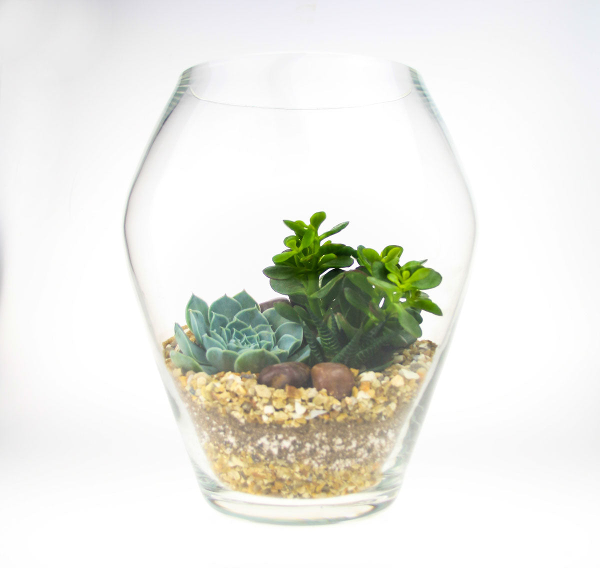 Tall Glass Terrarium Kit With Real Succulent Plants Indoor Plant