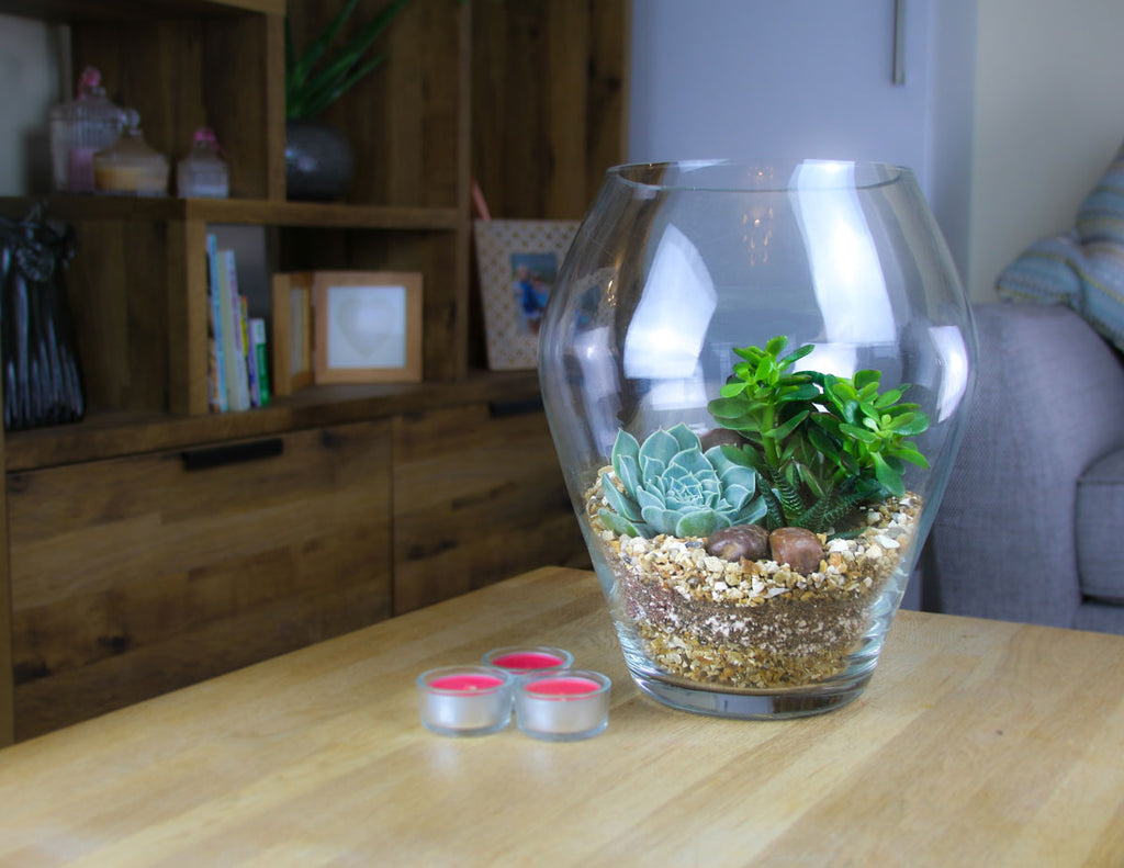 planted indoor terrarium with real plants
