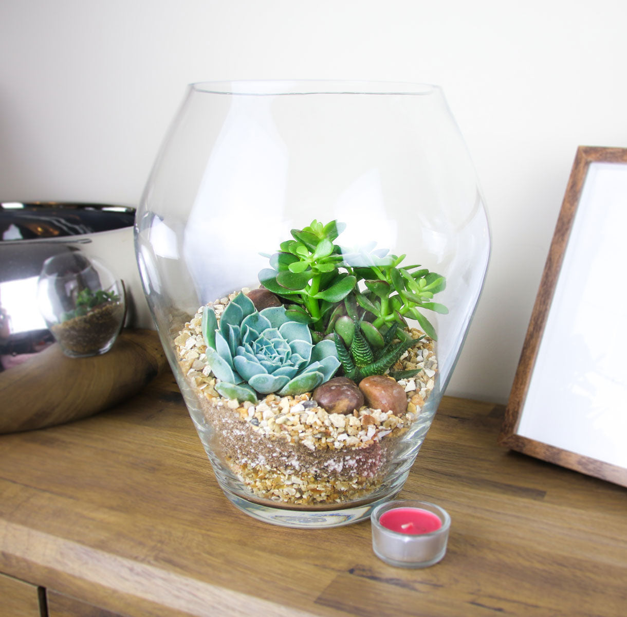 Tall Glass Terrarium Kit With Succulent Plants