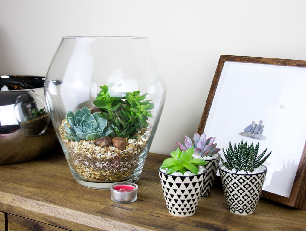 Interior Decor gift ideas with succulent plants
