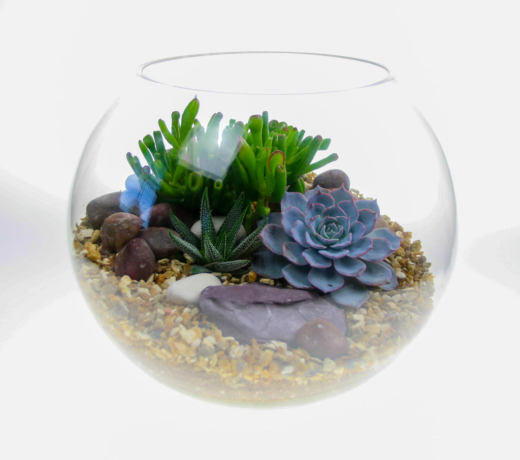 Large basketball sized terrarium