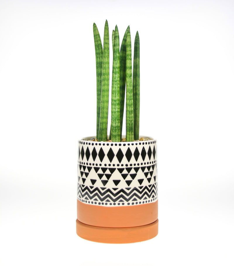 Tribal Planter with Sansevieria Cylindrica