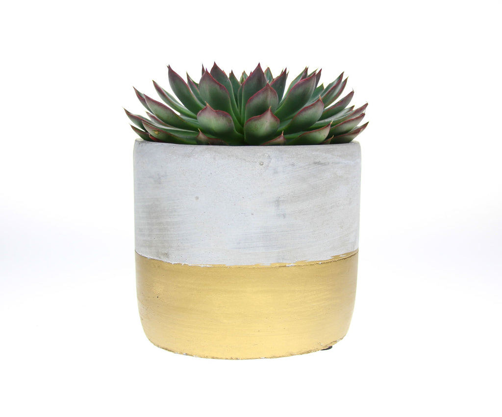 Gold dipped cement planter, concrete