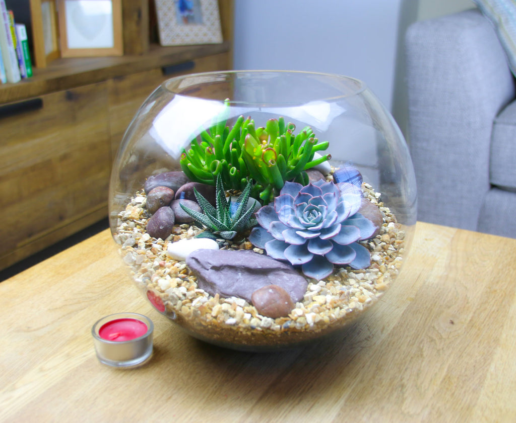 Glass terrariums in the UK