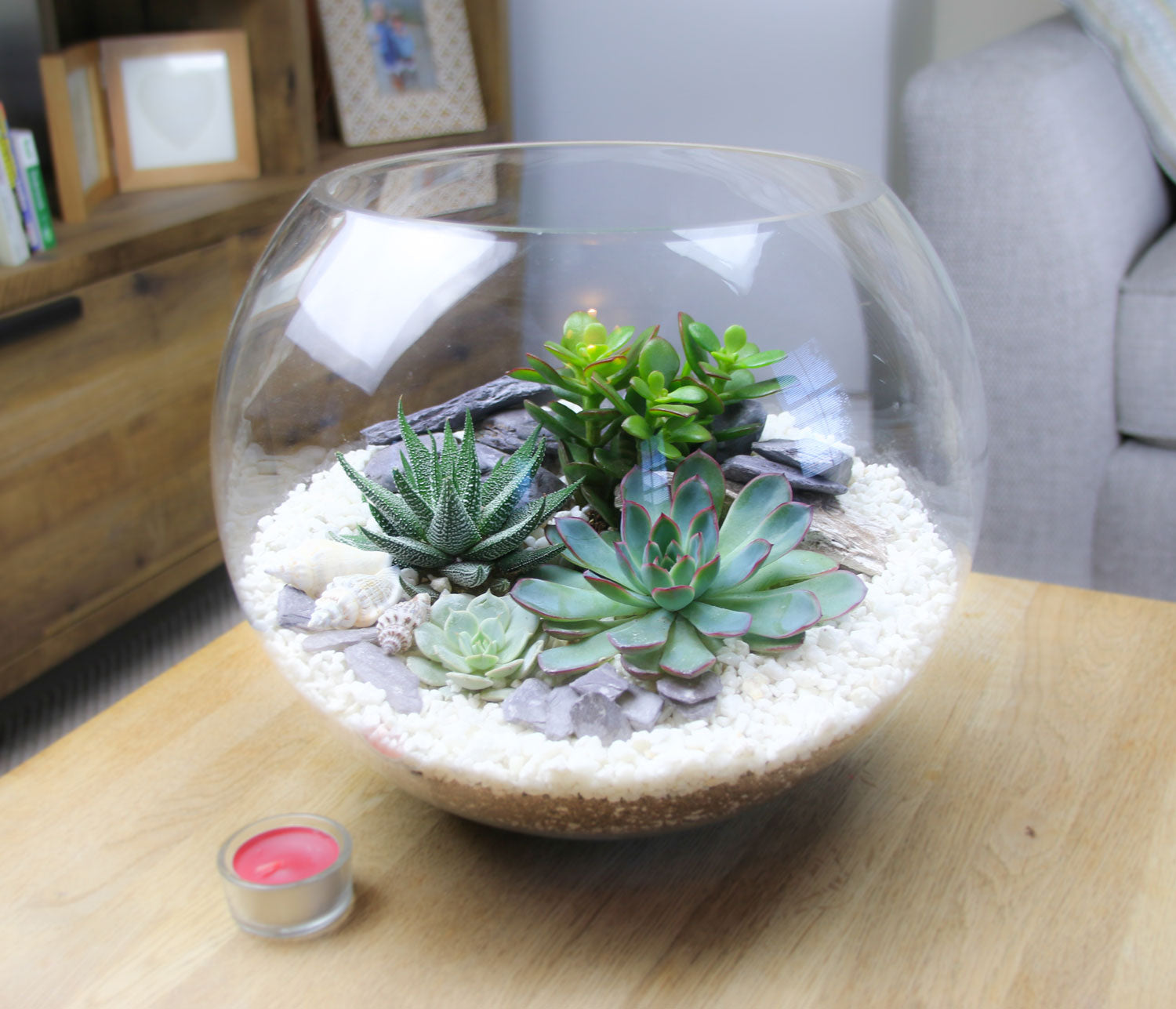 Extra Large Glass Globe Succulent Terrarium Kit With Real Succulent
