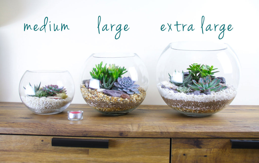 set of 3 different sized terrariums