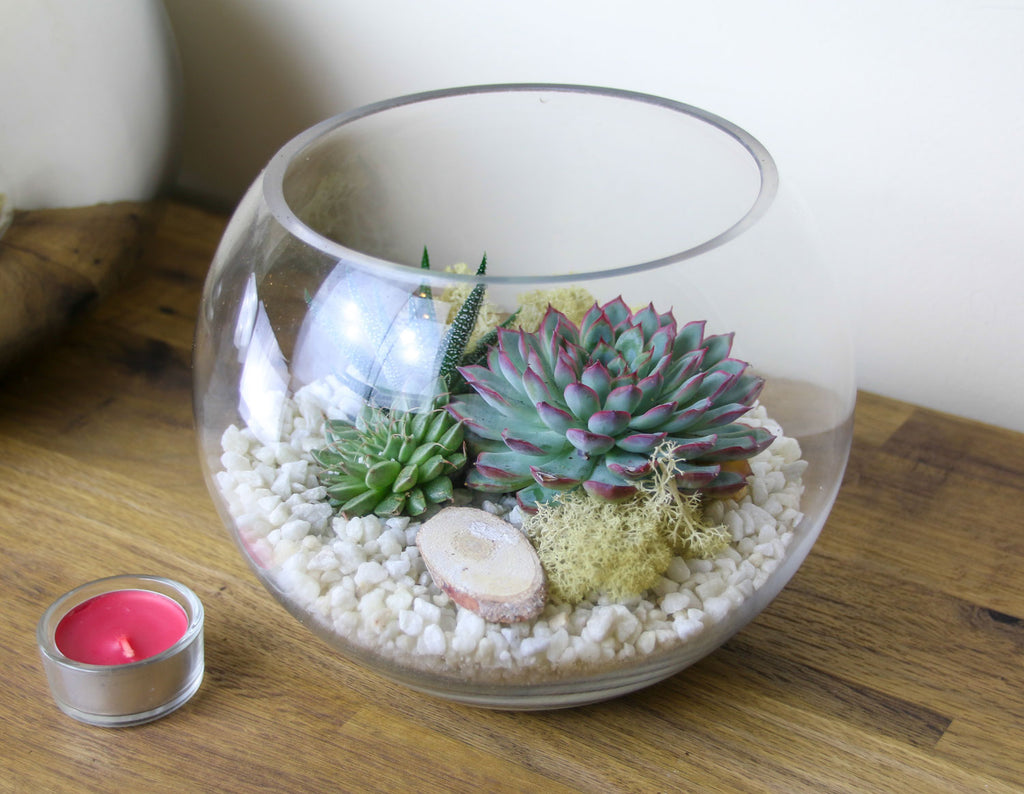 Globe Terrarium kit with white gravel