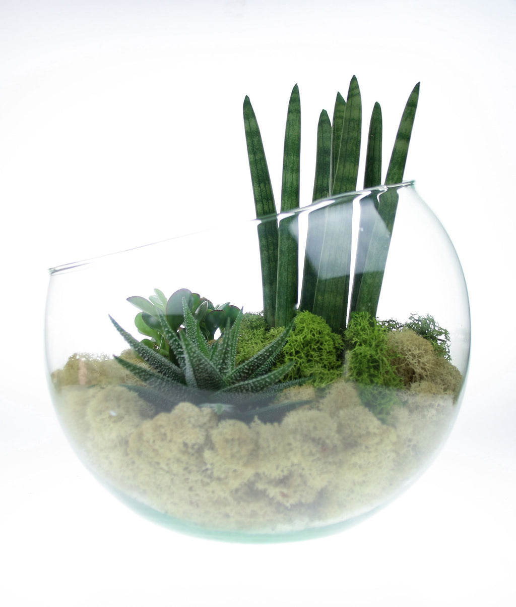 Terrarium kits with preserved moss
