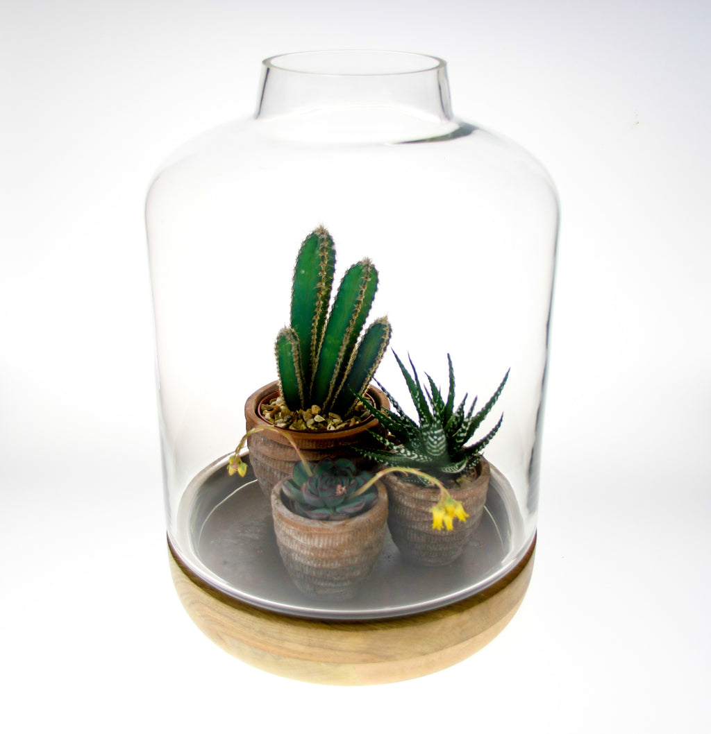 Succulent and cacti terrarium kit