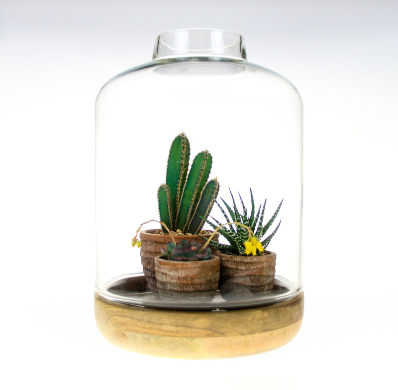 Glass Cloche and wood terrarium