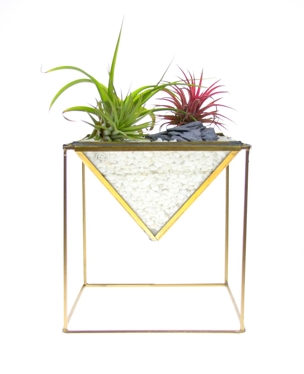 Planter with air plants